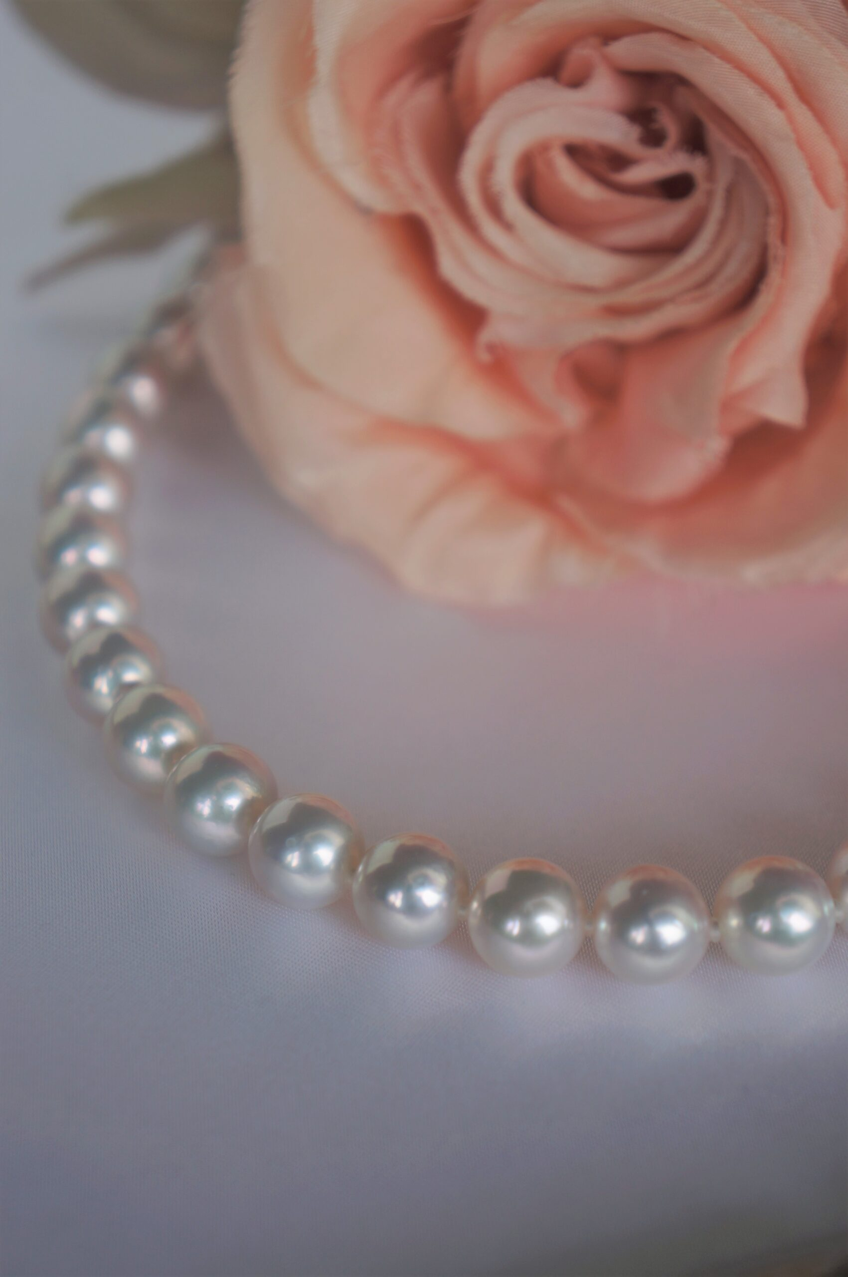 美しい輝き あこや真珠